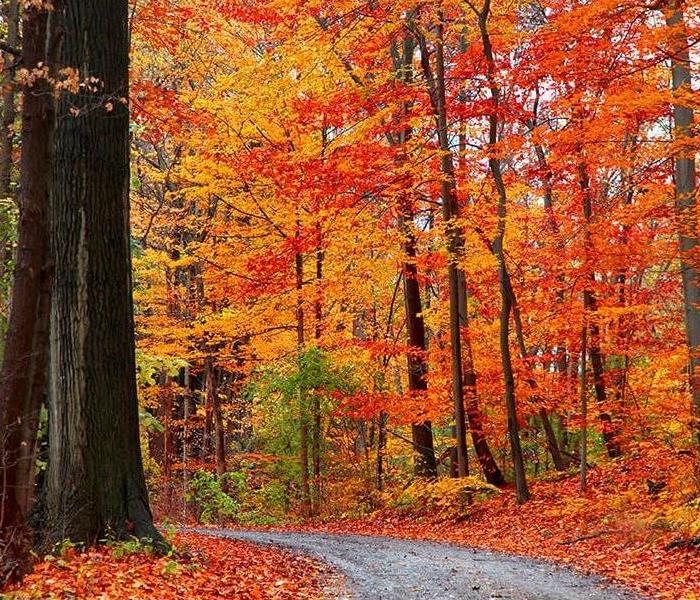 Bright colored fall leaves on a back country road.